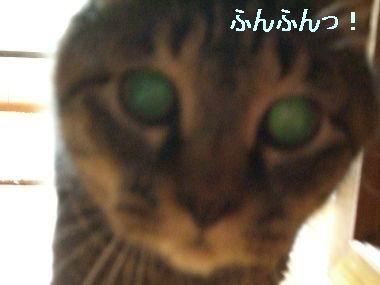 goma_kansatsu4.jpg