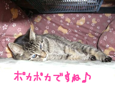 goma_kotatsu1.jpg