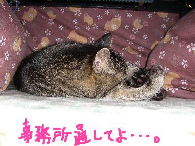 goma_kotatsu2.jpg