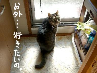 goma_sotoe1.jpg