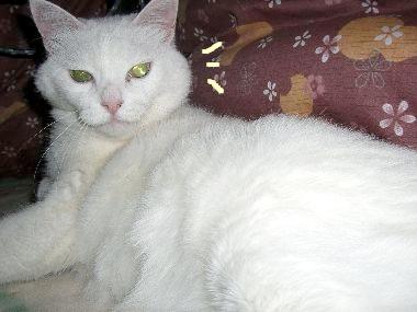 gomamilk_kotatsu2.jpg