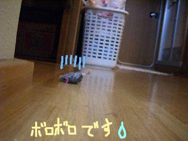 gomatonezu3.jpg