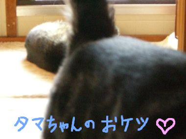 iriguchi4.jpg