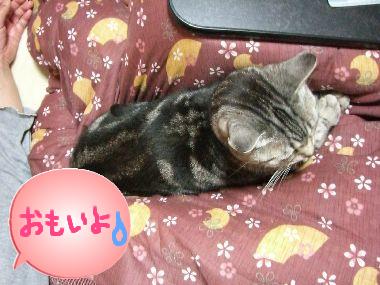 kotatsu_cat3.jpg