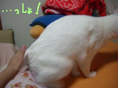 milk_dokkoisho2.jpg