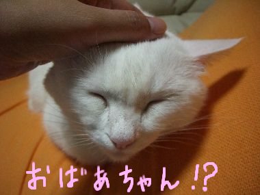 milk_iitage3.jpg