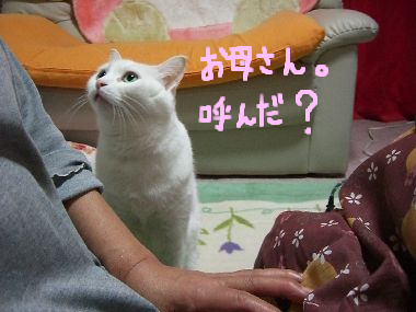 milk_kotaeru3.jpg