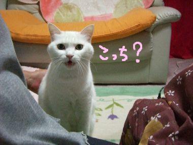 milk_kotaeru4.jpg