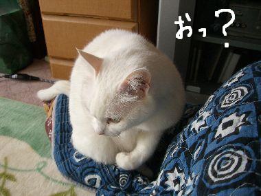 milk_otete2.jpg