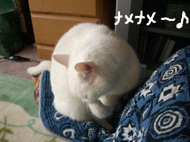 milk_otete3.jpg