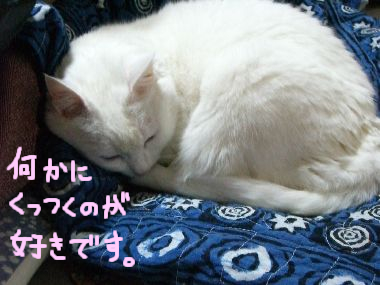 milk_tama_issho1.jpg