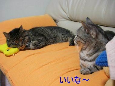 piyoko2.jpg