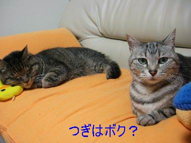 piyoko3.jpg