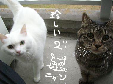 sotohaame4.jpg
