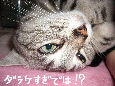 tama_darari3.jpg