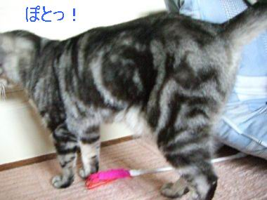 tama_hakobu3.jpg