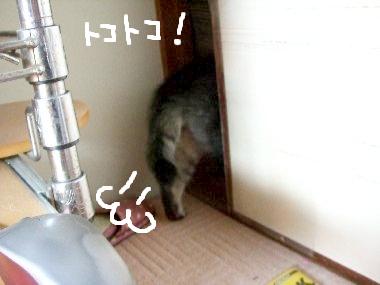 tama_houmon4.jpg