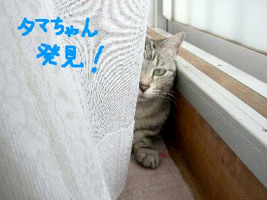 tama_kakurega2.jpg