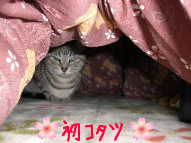 tama_kotatsu1.jpg