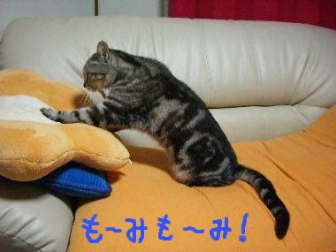 tama_momi1.jpg
