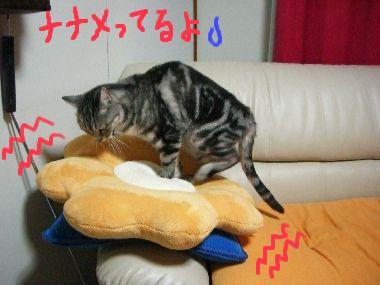tama_momi2.jpg