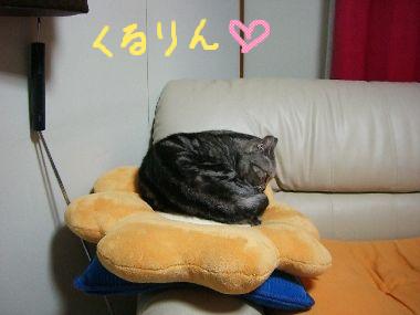 tama_momi3.jpg