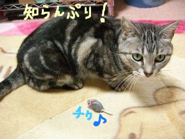 tama_nezumi1.jpg