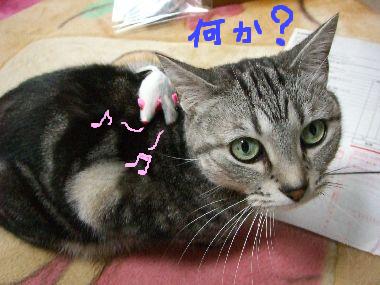 tama_nezumi3.jpg