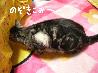 tama_okota1.jpg