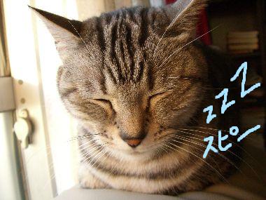 tama_oyasumiman1.jpg