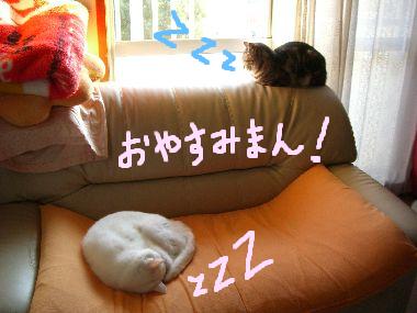 tama_oyasumiman2.jpg