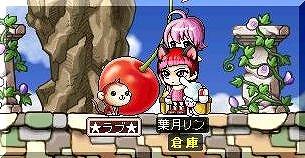 ss-Maple0013.jpg