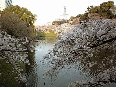 0904sakurachi2.jpg