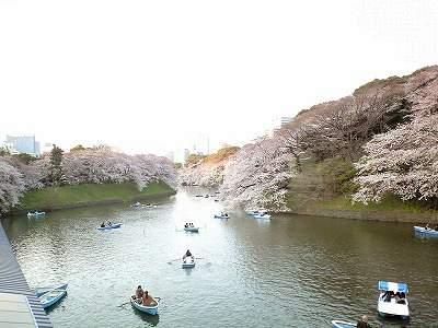 0904sakurachi3.jpg