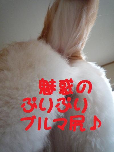 P1000181.jpg