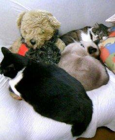ソファで猫団子