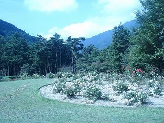 チロルの森