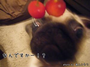 なんだかわからないけど食べ物みたいです。