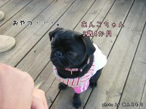 最年長あんこちゃん!