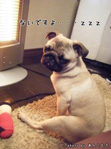 あっ、寝た。
