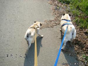 仲良く散歩。