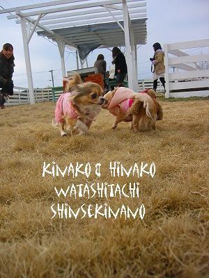 kinakohinako.jpg