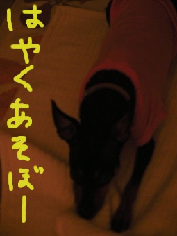 SANY0901.jpg
