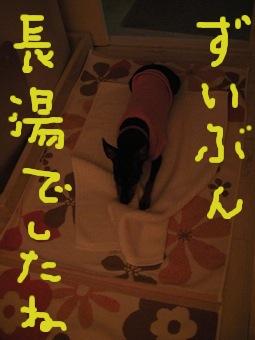 SANY0903.jpg