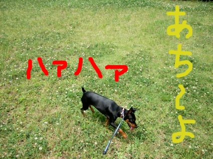 UNI_1572.jpg