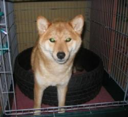 母犬★千尋ちゃん