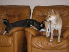 ソファの2人