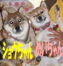 ショウちゃんめいちゃん2