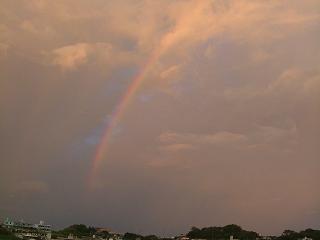 夕方の虹だよ。。