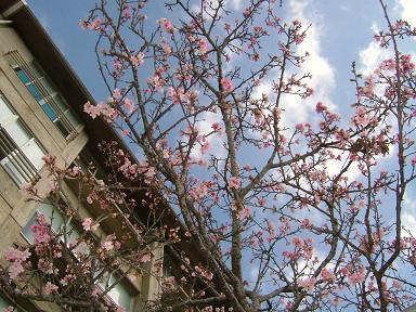 桜かな・・・?
